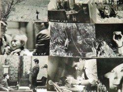 画像3: 山崎努 新珠三千代・主演「悪の紋章」 映画スチール写真 13枚